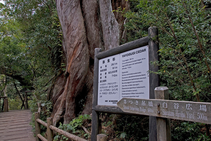 Sign underneath a tree at suspension bridge in Shiratani Unsuikyo in Japan