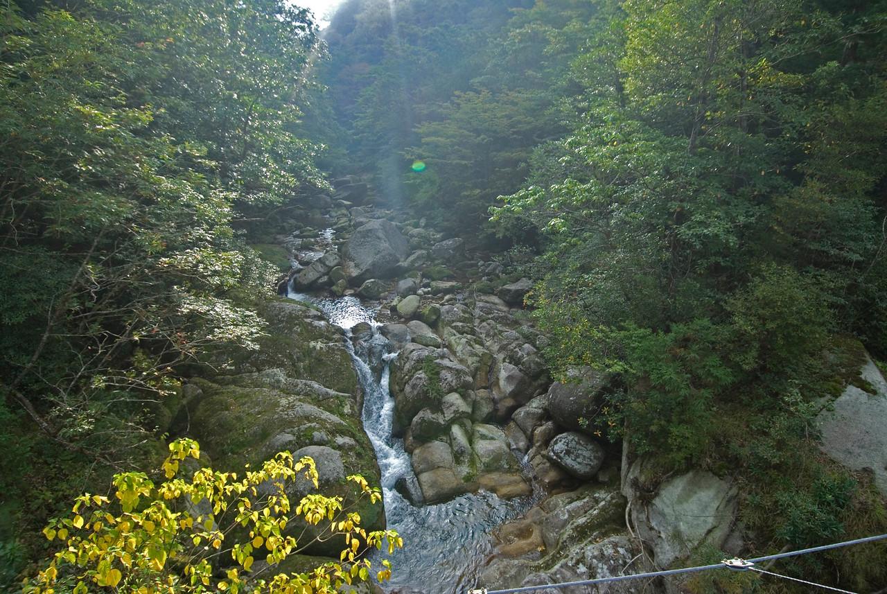 Natural light streaks above the creek in Shiratani Unsuikyo - Yakushima, Japan
