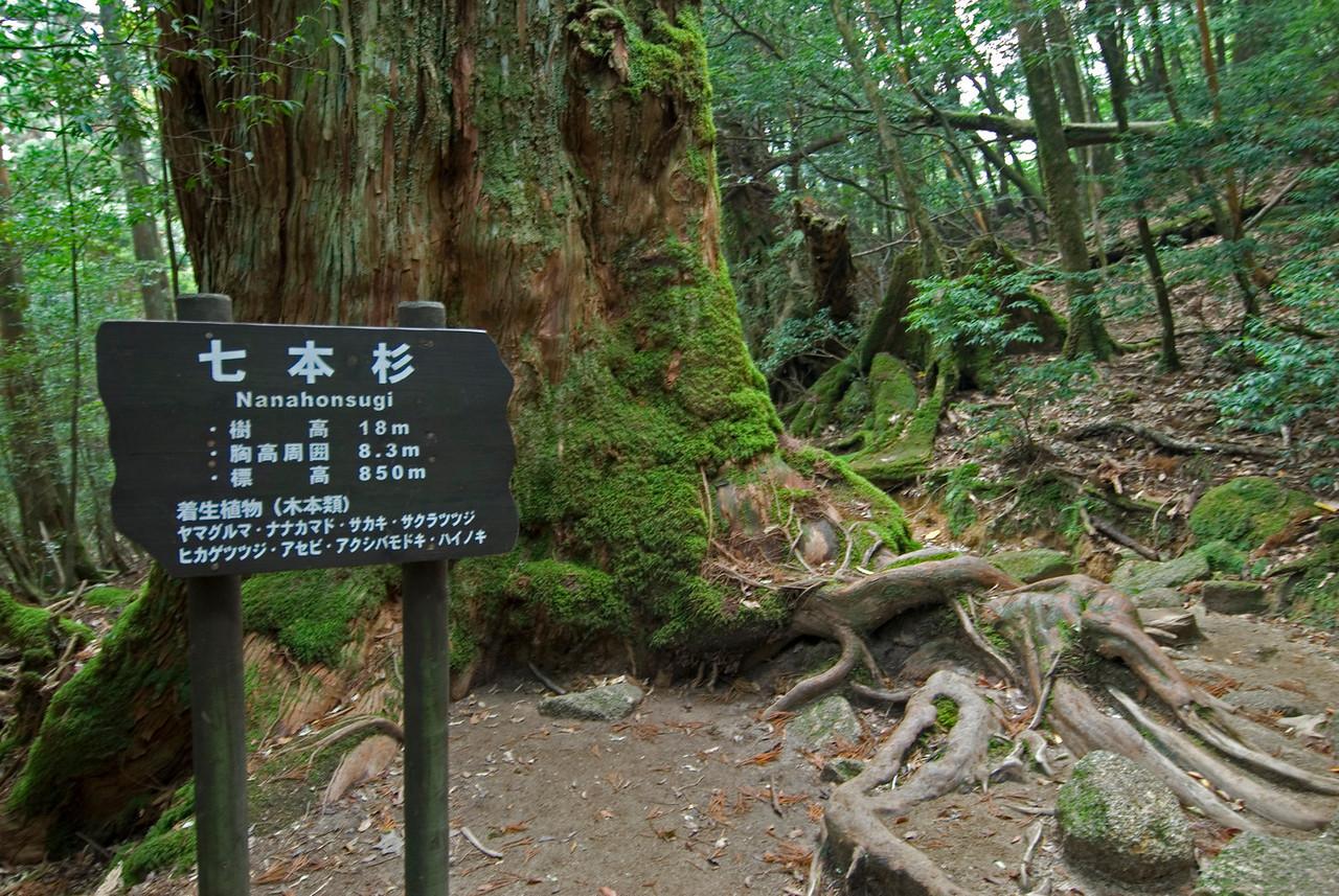 Sign beneath a tree in Shiratani Unsuikyo in Yakushima, Japan
