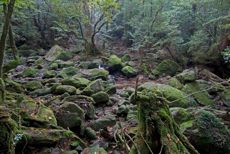 Rocks filling up the shallow creek in Shiratani Unsuikyo - Yakushima, Japan