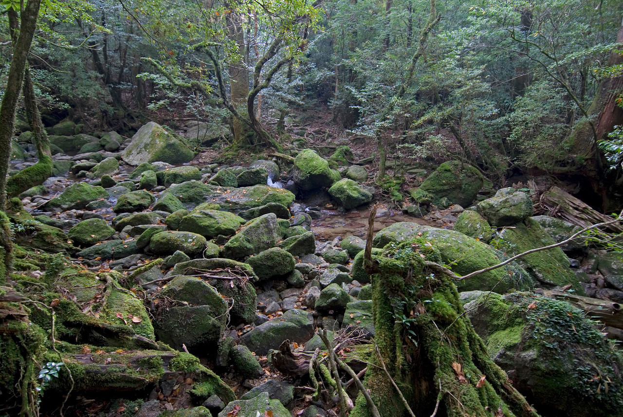 Rocks filling up the shallow creek in Shiratani Unsuikyo - Yakushima, Japan