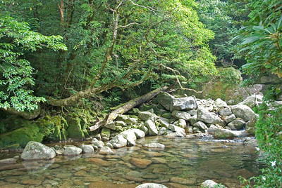 Romantic shot of creek with rocks and trees nearby