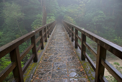 View of the foggy rainforest from the wooden bridge in Yakushima, Japan