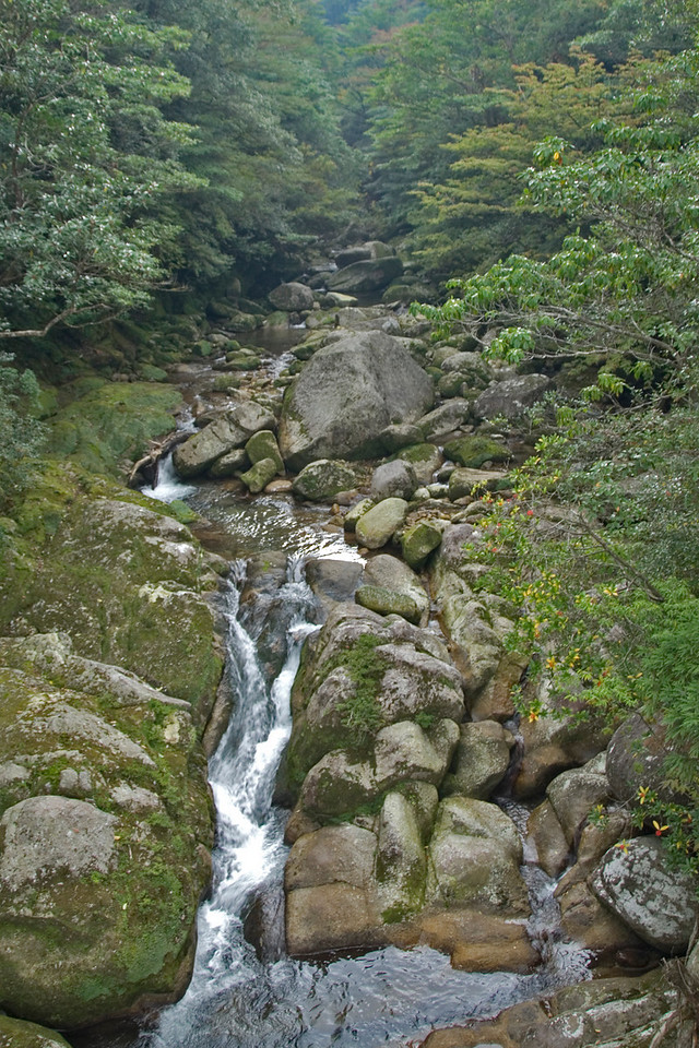 Flowing creek with rocks inside the park at Shiratani Unsuikyo in Japan