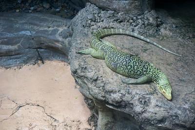 Taking a nap at Ueno Zoo