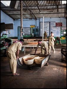 Pattumallay tea factory
