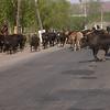 Uz 2170 tussen Jalalabad en Tas-Komur