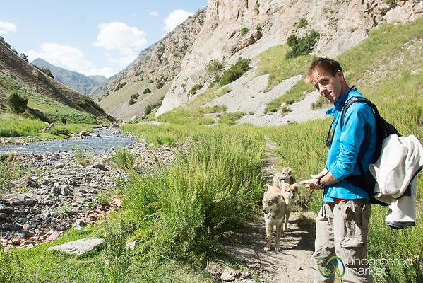 Shepherd Dogs Herding Us - Trekking in the Alay Mountains, Kyrgyzstan