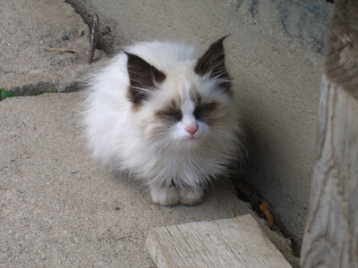 White Kitty! - Altyn Arashan, Kyrgyzstan