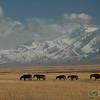 Line of Horses and Peak Lenin - Sary Tash, Kyrgyzstan