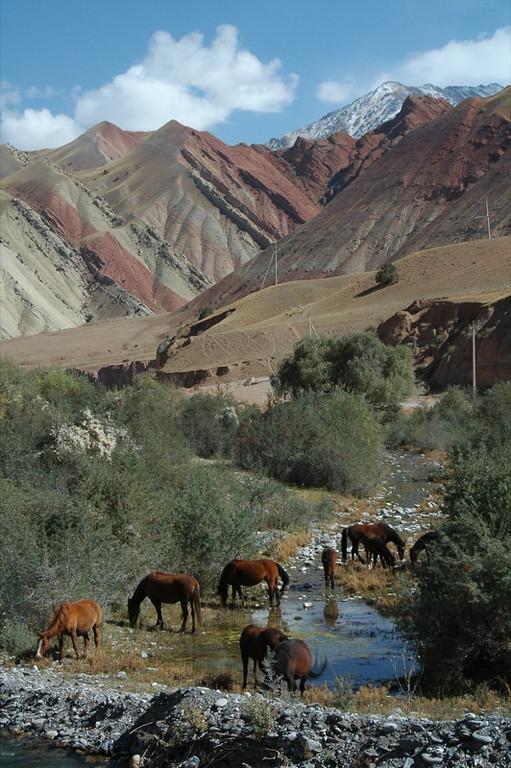 Horses in Mountains - Osh to Sary Tash, Kyrgyzstan