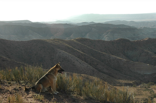 Dog Hiking Companion - Manzhyly, Kyrgyzstan