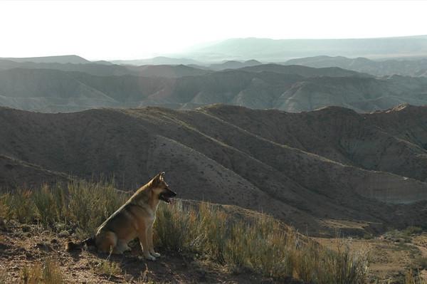 Dog Hiking Companion - Manzhyly, Kyrgyzstan