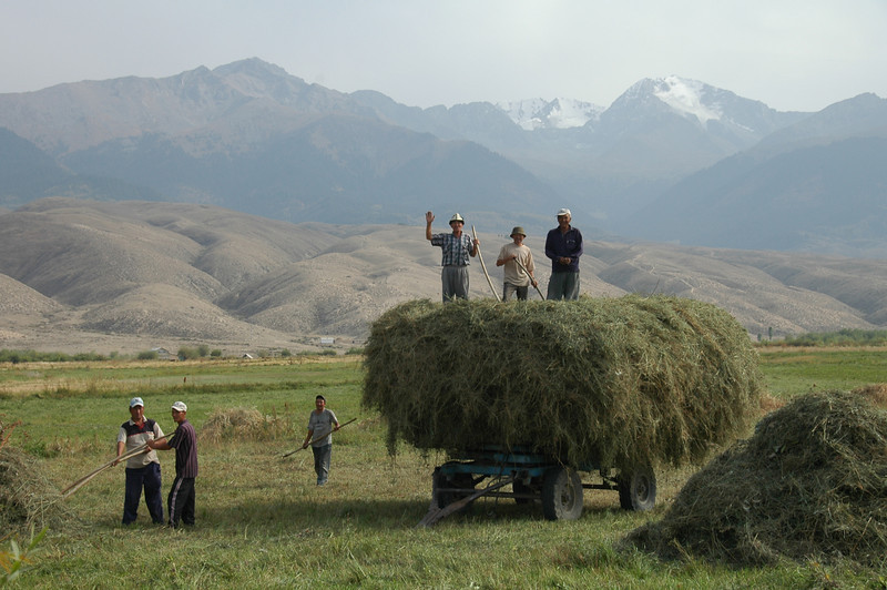 Kyrgyz Agriculture, Making Hay - Issyk-Kul, Kyrgyzstan