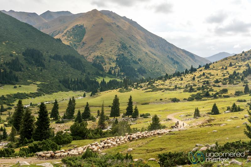 Shepherds and their Sheep - Jyrgalan Trek, Kyrgyzstan