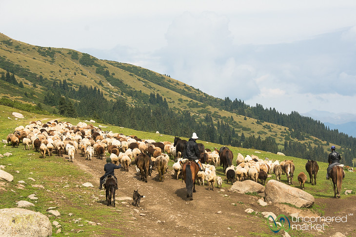 Shepherds with their Sheep - Jyrgalan Trek, Kyrgyzstan