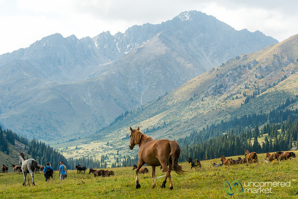 Walking Amongst Horses - Jyrgalan Trek, Kyrgyzstan