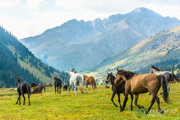 Horses on the Jailoo (High Pasture) - Jyrgalan, Kyrgyzstan