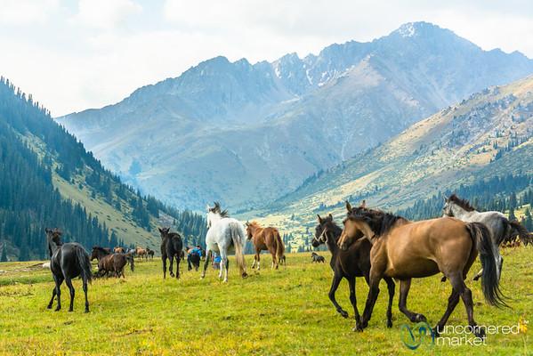 Horses on the Jailoo (High Pasture) - Jyrgalan, Kyrgyzstan