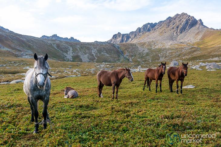 Horses at the Campsite - Jyrgalan Trek, Kyrgyzstan