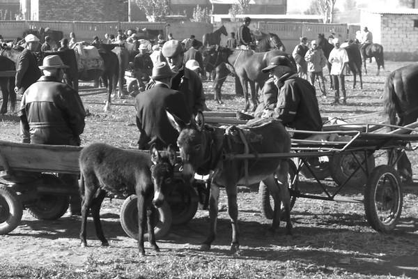 Karakol Animal Market - Kyrgyzstan
