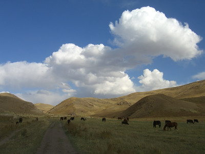 Horses and Cows on Autumn Pastures - Kyrgyzstan