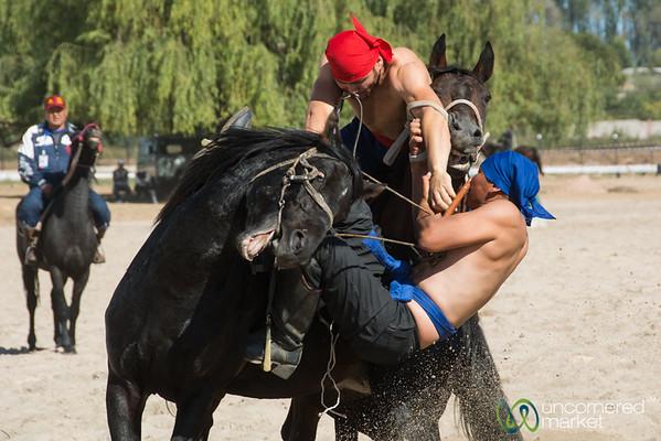 Er Enish, Horseback Wrestling - World Nomad Games 2016