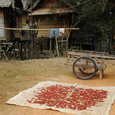 Sun Dried Chillies - Nong Khiaw, Laos