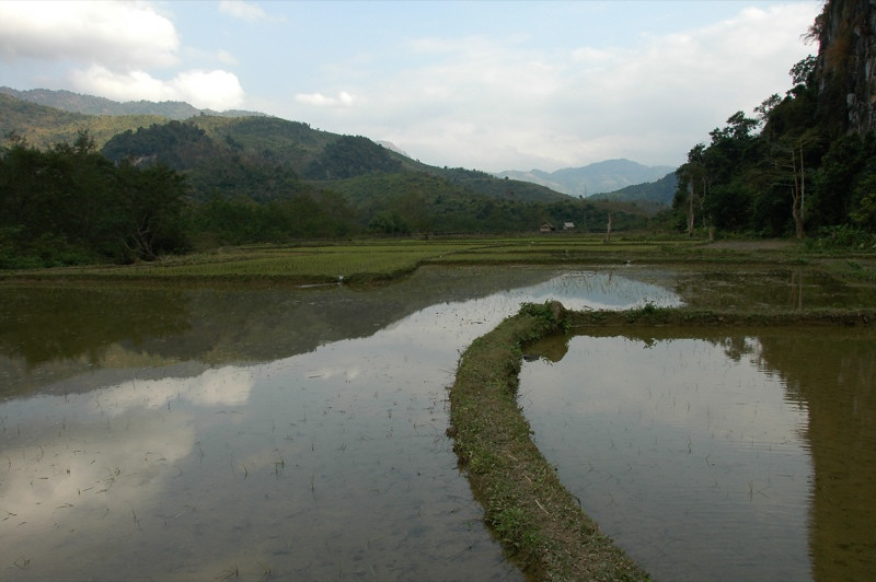 Flooded Rice Fields - Nong Khiaw, Laos