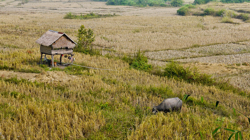 A house in the rice fields in rural Laos.