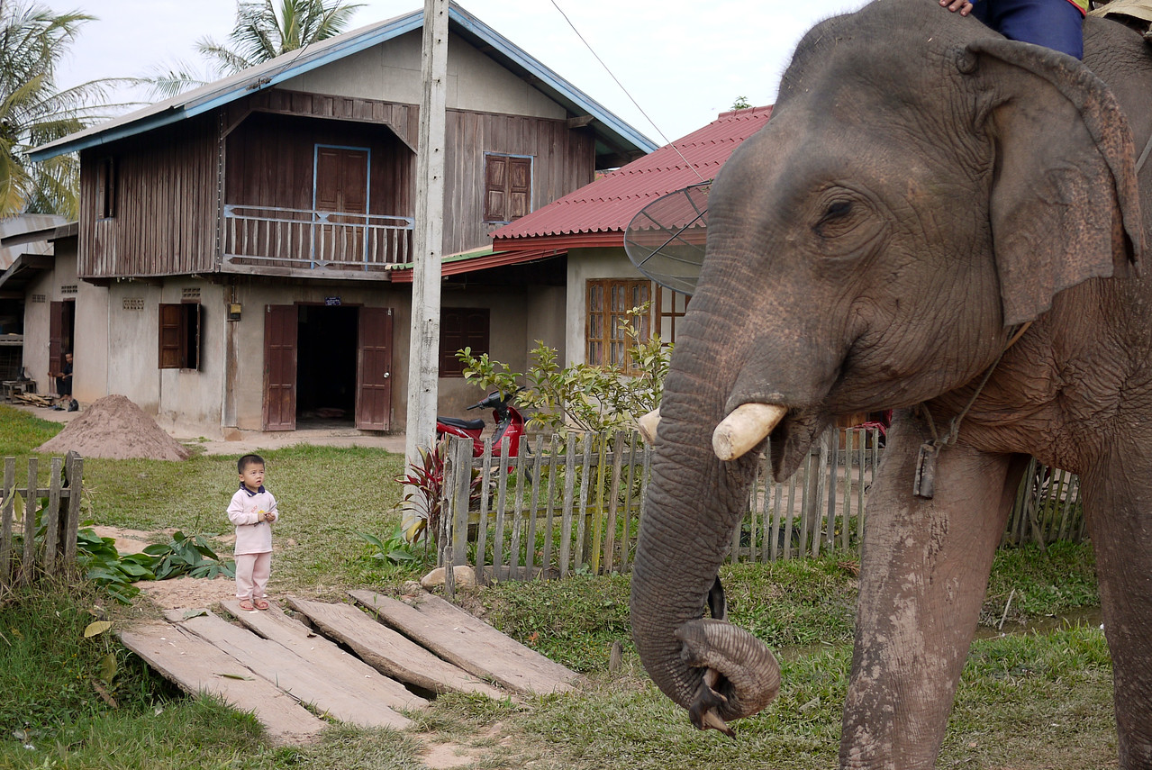 A small boy looks on in wonder at the huge bull elephant walking by in Hongsa, Laos.