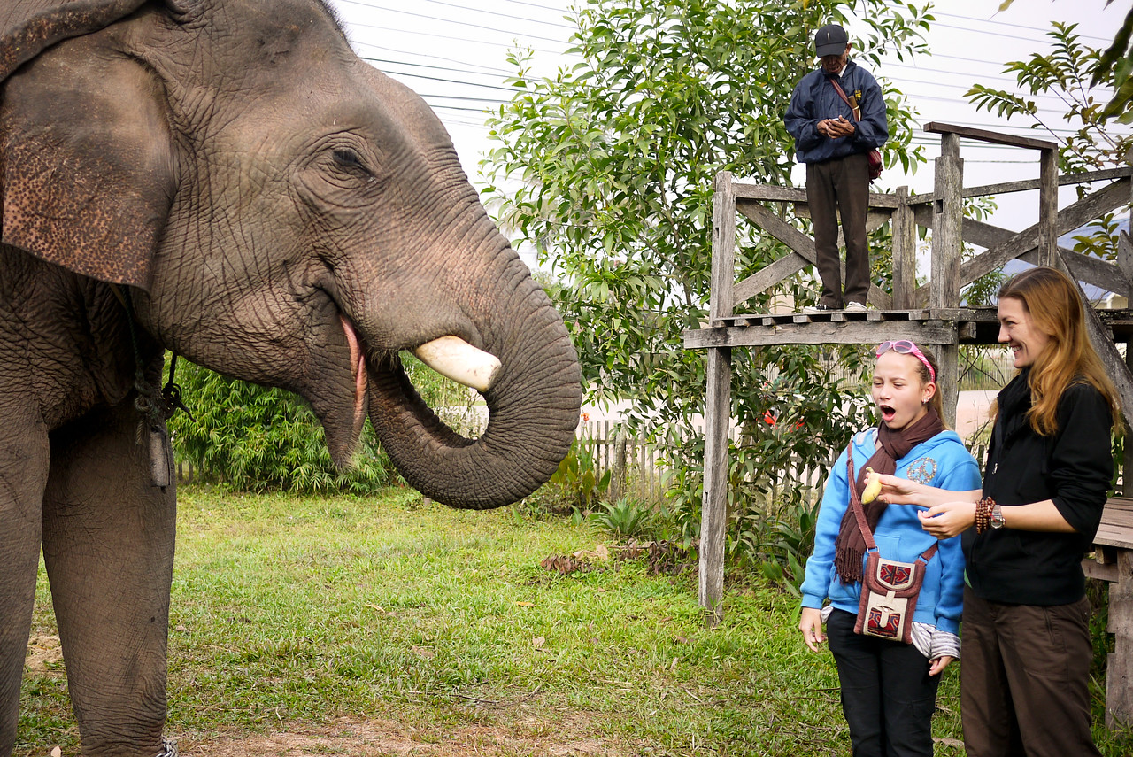 Ana is amazed by the elephant swift removal of the banana from her hand in Hongsa, Laos.