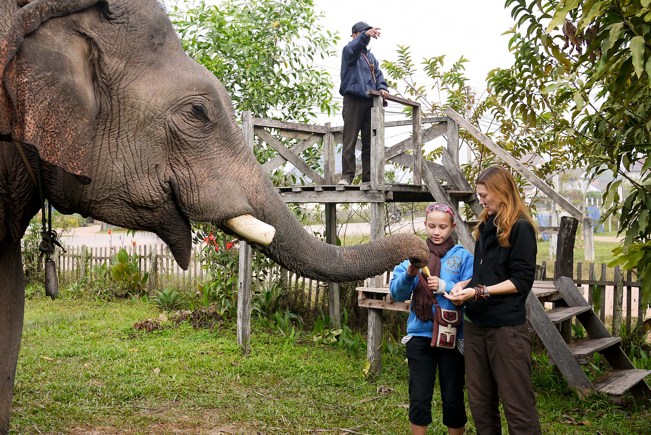 Ana and I feed the frisky bull elephant some bananas in Hongsa, Laos.