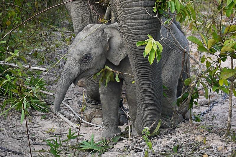 A playful baby boy elephant.