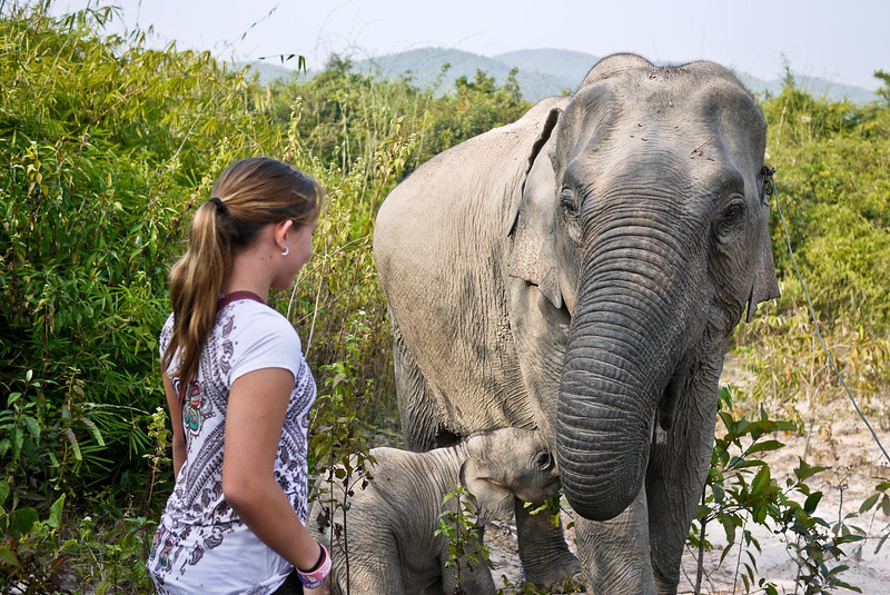 Ana meets a mother and baby elephant.
