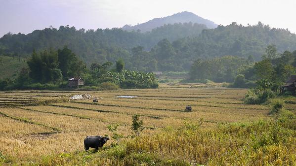 Rural Laos on our elephant trek.
