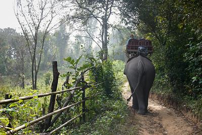 A rural elephant trek outside of Hongsa, Laos.