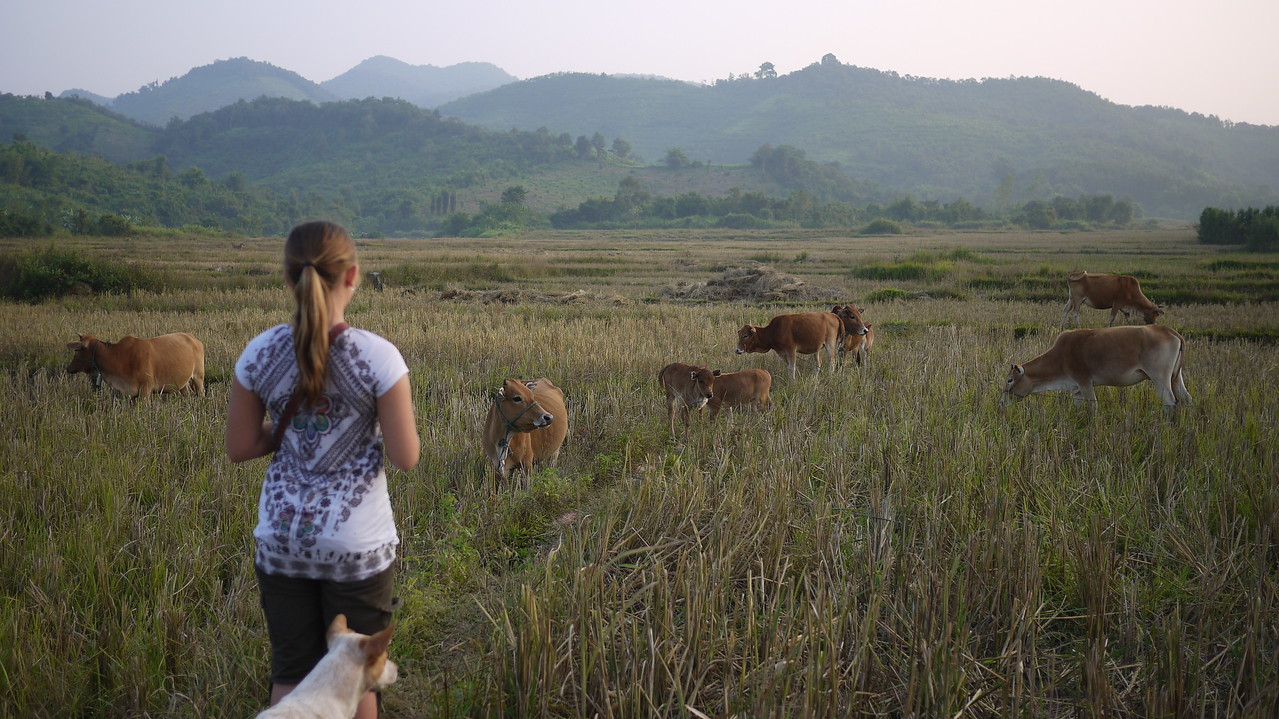 Definitely not raised in the country, Ana was captivated by the cows and the pretty hills of the Sainyabuli province in Laos.