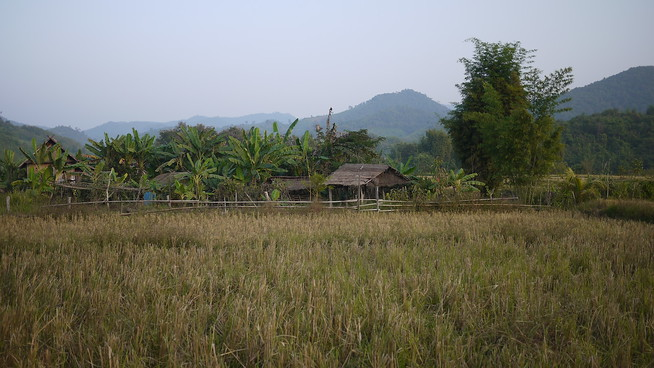 rice paddy laos