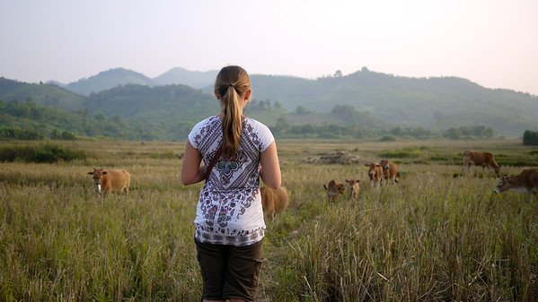 Ana takes in the cows, rice paddies, and hills in Hongsa, Laos.