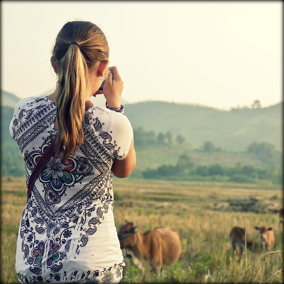 Ana takes a moment to photograph some cows in rural Laos.