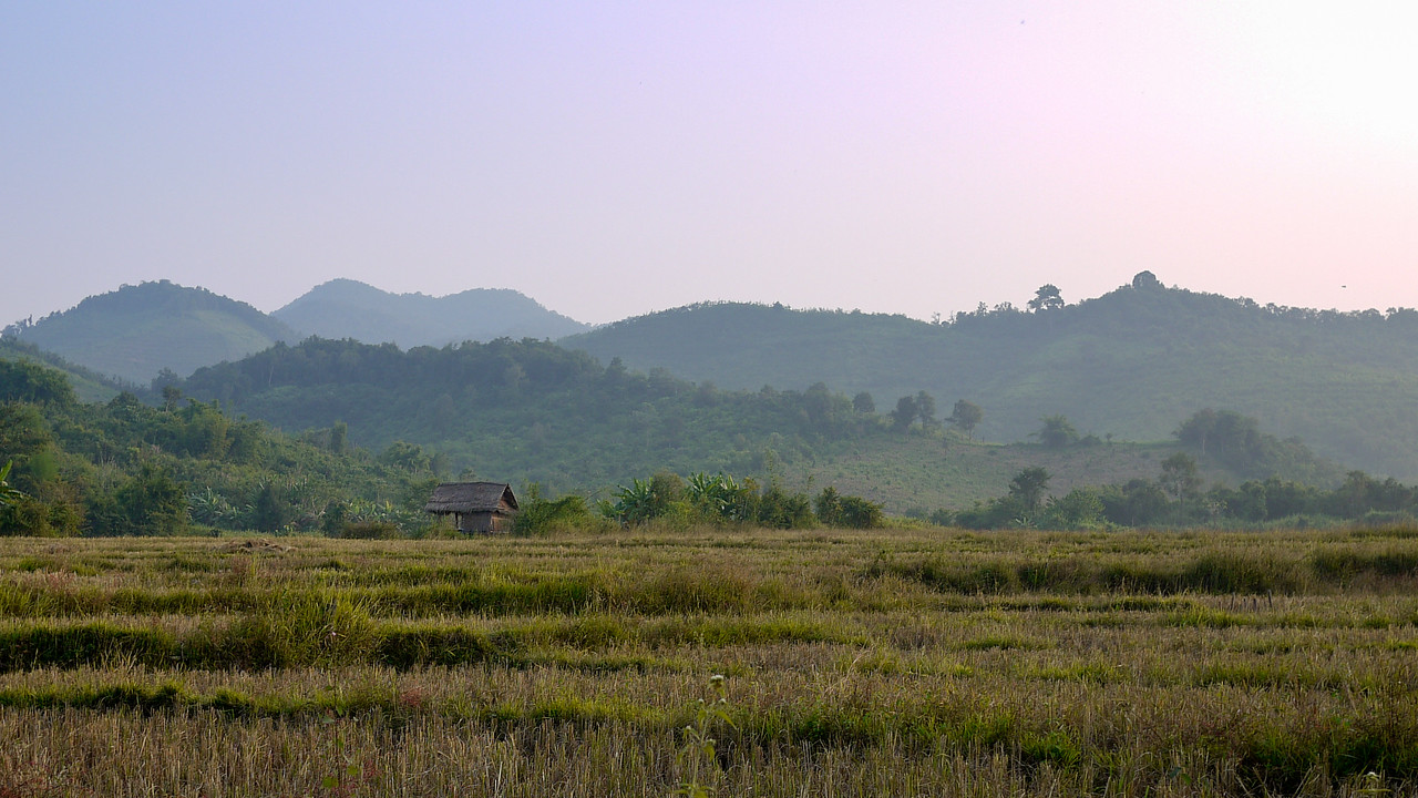 Green rice paddies in rural Loas, just outside of Hongsa.