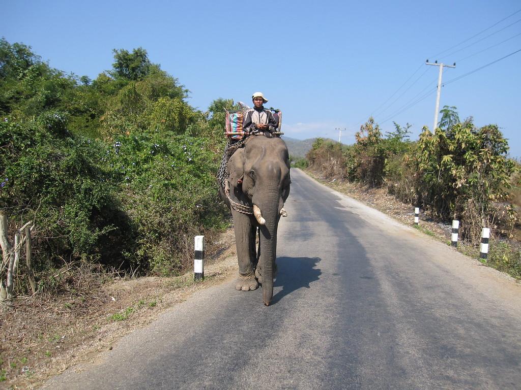 work elephant laos