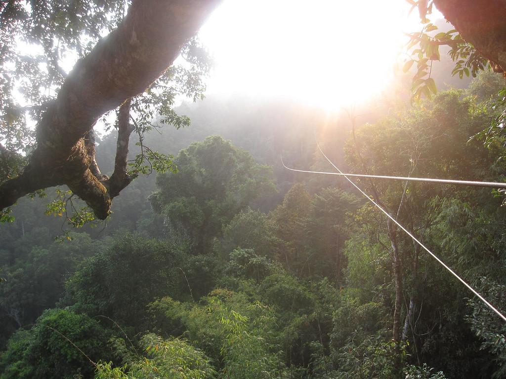 Ziplines in the Bokeo Nature Reserve in Laos