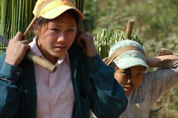 Khmu Girls Carrying Bamboo Reeds - Luang Prabang, Laos