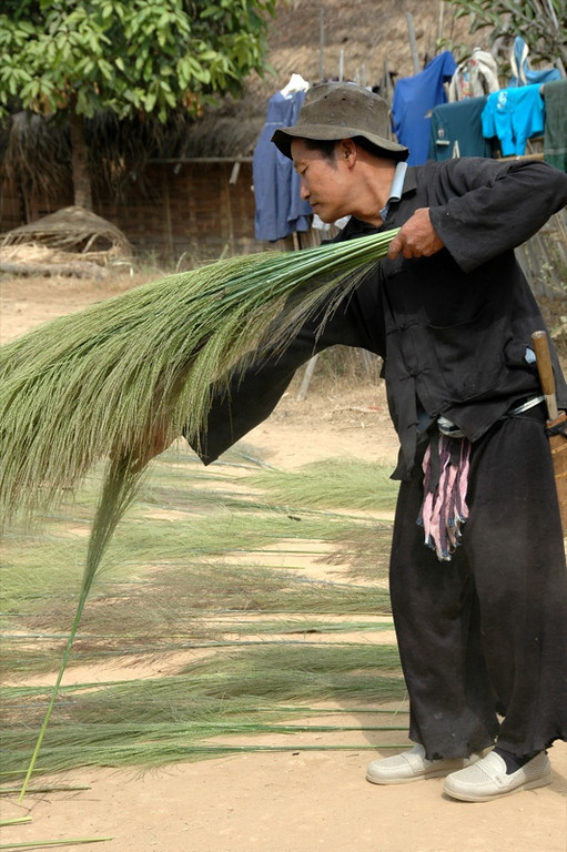 Drying Bamboo Flower Reeds - Luang Prabang, Laos