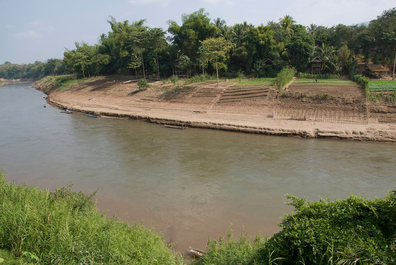 Rice fields along Mekong River in Luang Prabang, Laos
