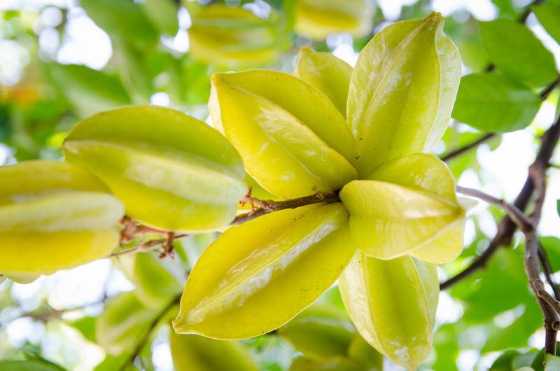 Star fruit tree on the street.