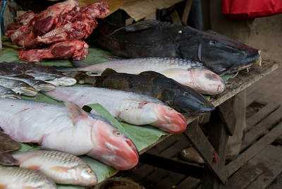 River Fish sold in market at Luang Prang, Laos