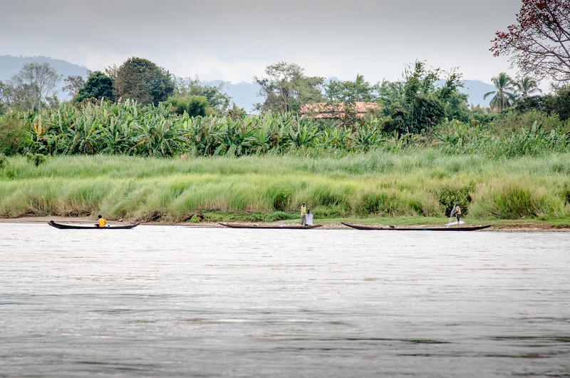"A trio os Lao ""Three-plank"" canoes in front of a banana grove."